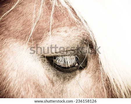 horse detail, head and eye - stock photo