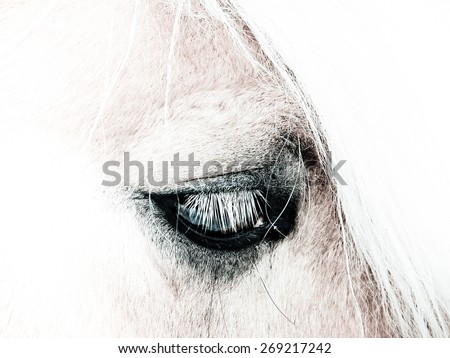 horse detail head and eye, high key - stock photo