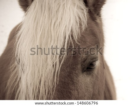 horse detail 101 head and eye, toned image - stock photo