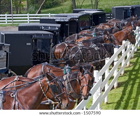 Horse drawn carriages parked at an Amish auction in Berlin, Ohio. - stock photo