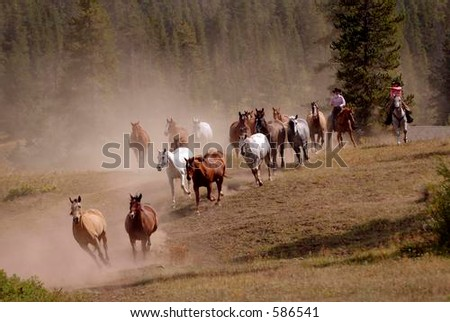 Horse Drive with Two Cowgirls - stock photo
