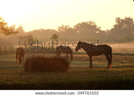 Horse eating grass at sunset - stock photo