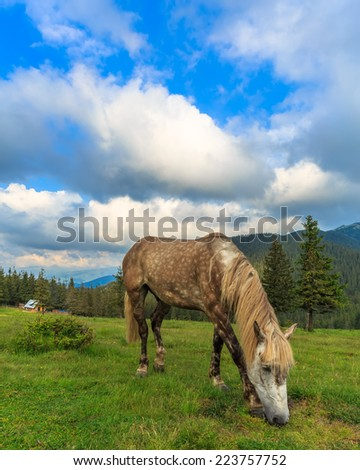 Horse eating green grass on a pasture - stock photo