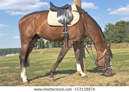 Horse eating hay on a field - stock photo