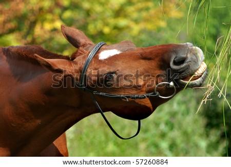 Horse eats grass - stock photo
