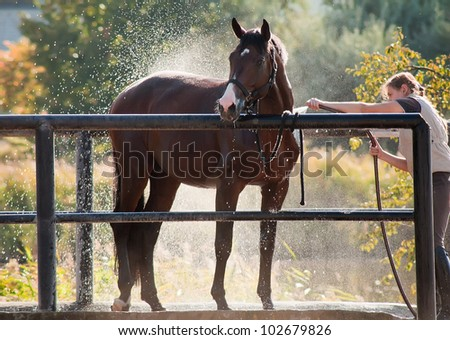 Horse enjoying the shower outdoor - stock photo