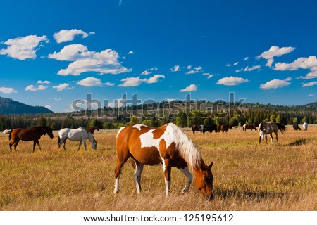 Horse enjoys in Yellowstone National Park, USA - stock photo