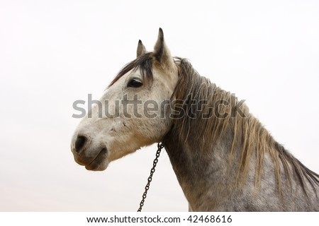 Horse (Equus caballus). - stock photo