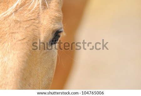 Horse eye - stock photo
