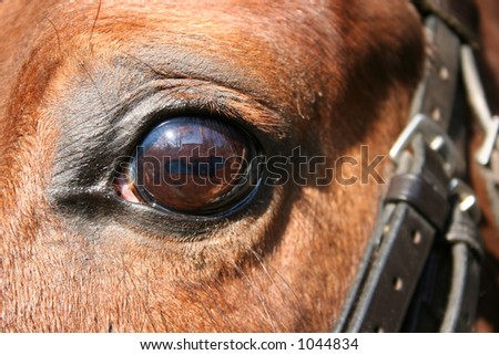 horse eye and bridle - stock photo