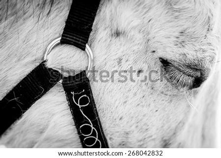 Horse eye close up - stock photo