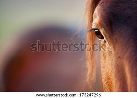 HORSE EYE DETAIL - stock photo