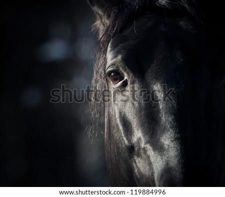 horse eye in dark - stock photo