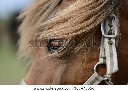 Horse eye with long lashes (selective focus) - stock photo