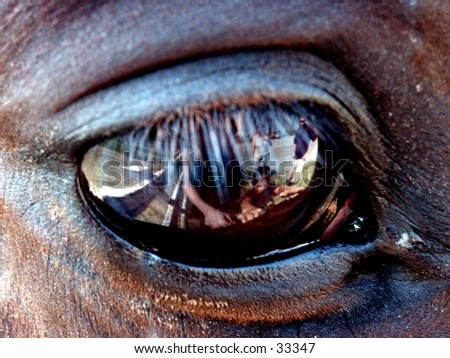 Horse eye with reflection of people. - stock photo