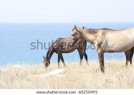 Horse family. Wild life nature - stock photo