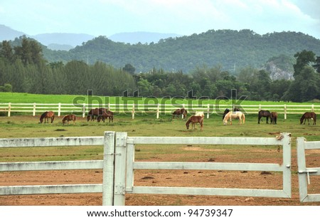Horse farm at Nakhonratsema province,Thailand. - stock photo