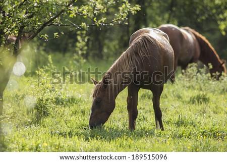 Horse feeding with fresh grass - stock photo