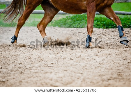 horse galloping in paddock - stock photo