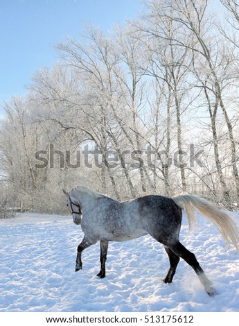 Horse galloping on snow field