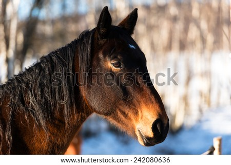 Horse gallops in winter