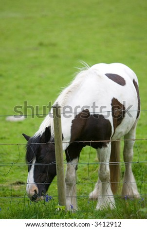 Horse grazing by a fence in a green field - stock photo