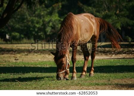 Horse grazing grass - stock photo