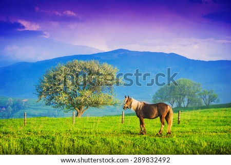 Horse grazing in a meadow of Ukrainian mountain village. Early misty morning - stock photo