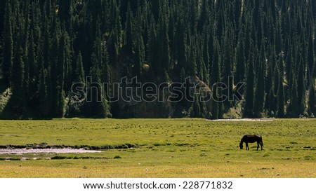 Horse grazing in the mountains - stock photo