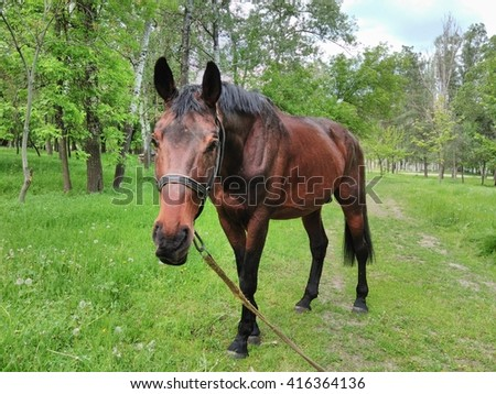Horse grazing in the pasture in the spring.