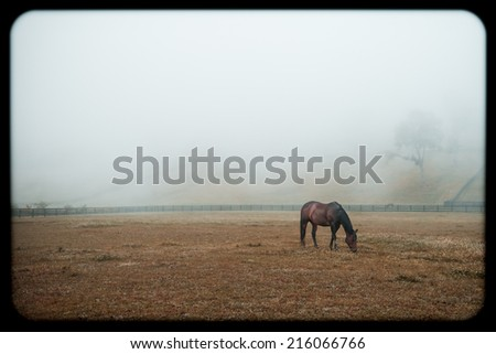 Horse Grazing on a Foggy Morning, Instagram Style - stock photo