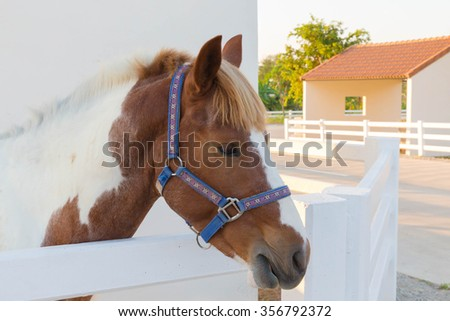 Horse grazing on meadow - stock photo