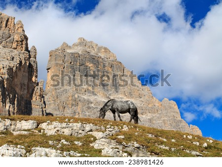 Horse grazing on the hillside behind the mountains in the Dolomites,Italy - stock photo