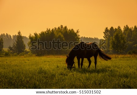 horse grazing on the meadow in the evening