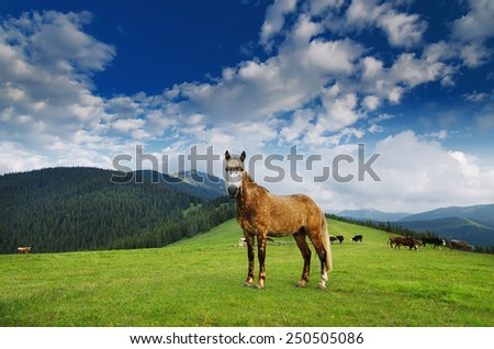 Horse grazing on the mountain meadow in Carpathian, natural landscape background - stock photo