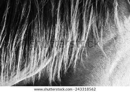 Horse hair background