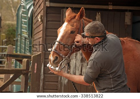 Horse having a dental clamp put on for his routine checkup - stock photo