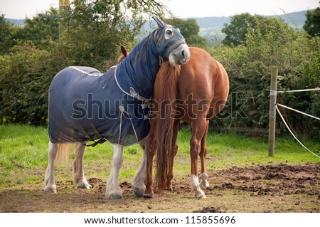 Horse having a scratch on his companion - stock photo