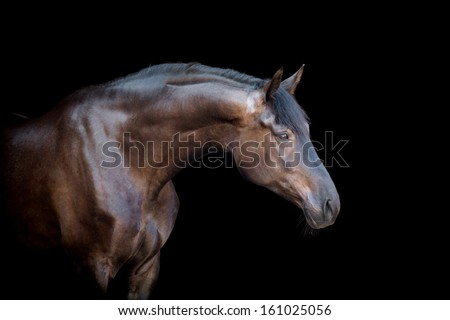 Horse head isolated on black background. - stock photo