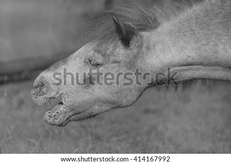Horse head on black and white image - Selective focus - stock photo