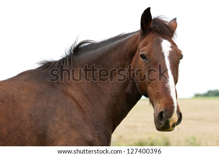 Horse head on the field background