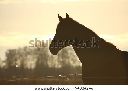 Horse head silhouette on sunset background