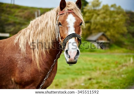 Horse head with beautiful mane close up - stock photo