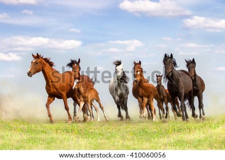 Horse herd run on spring pasture against blue sky - stock photo