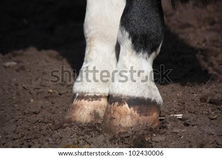 Horse hoof close up - stock photo