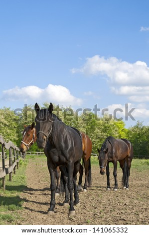 Horse, horses on the farm on a sunny day with nice clouds, collection
