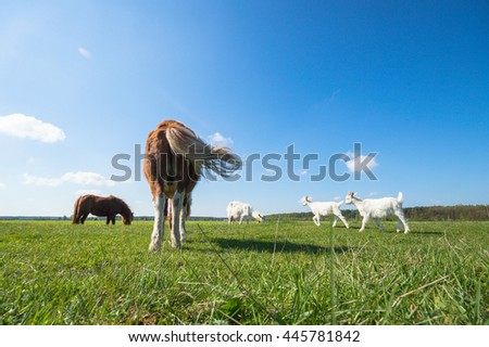 horse in a field, farm animals,  - stock photo