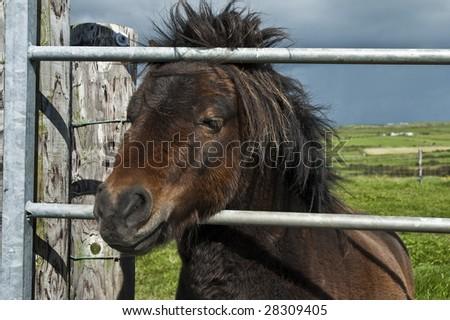 Horse in a gate - stock photo