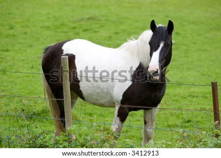 Horse in a green field - stock photo