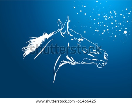 horse in a night - stock photo